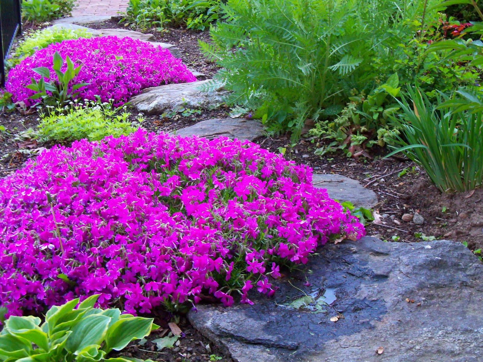 5 Plante Rezistente La Seceta Pentru Gradina Ta De Vara