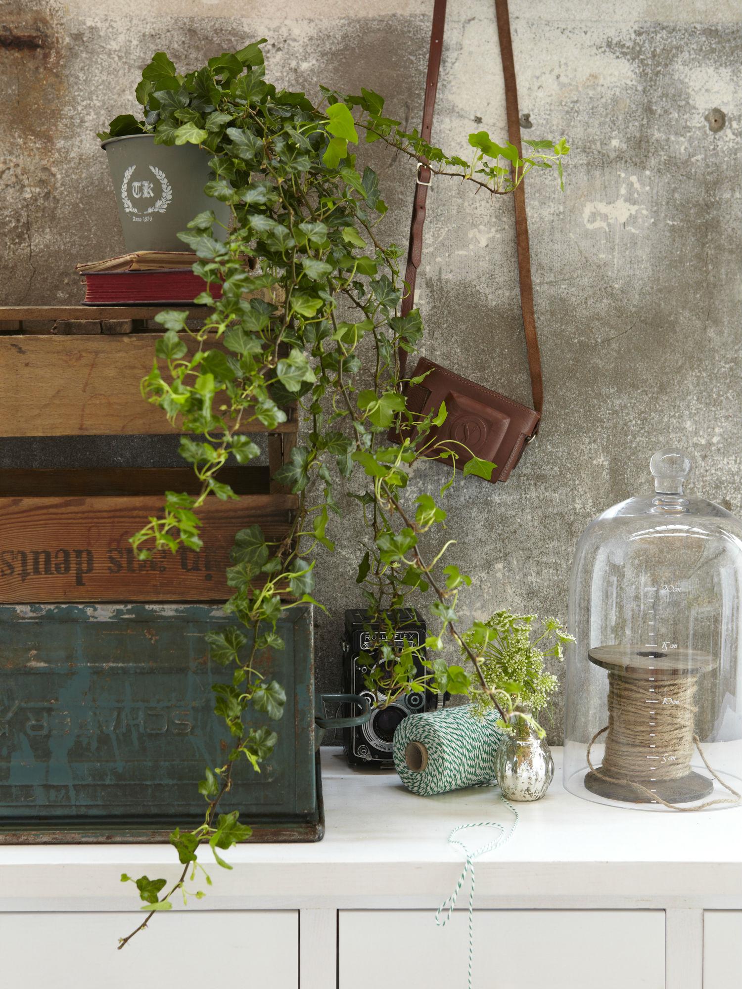 3 plante perfecte pentru a ti decora biroul for Plante de interior